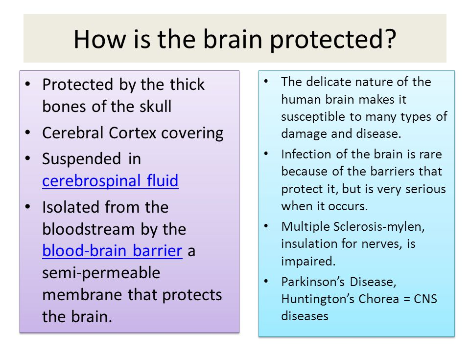 How is the brain protected.