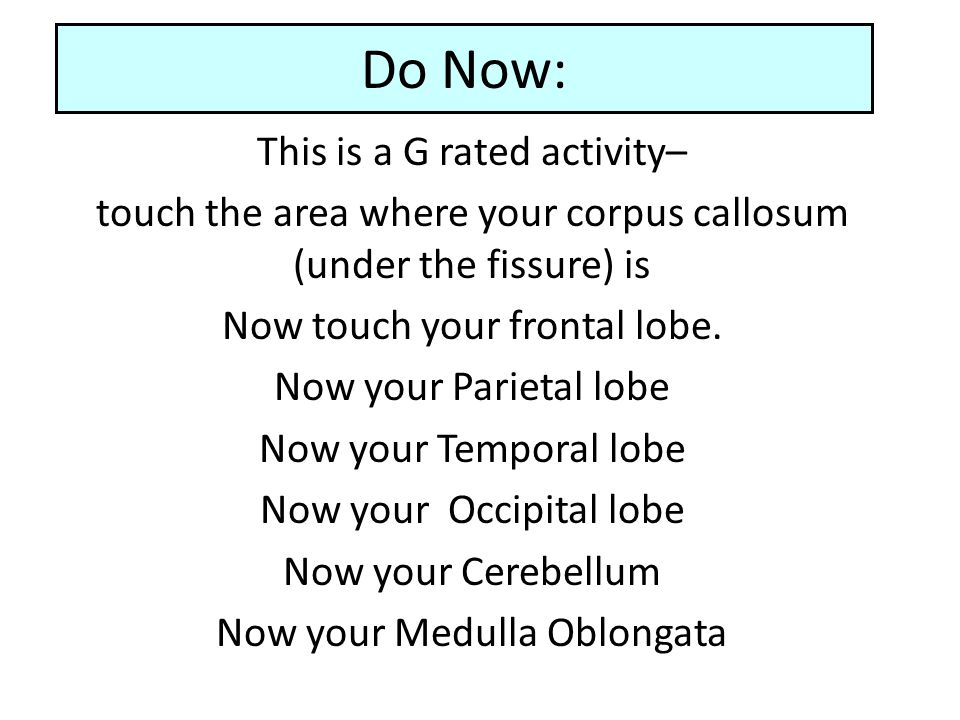 Do Now: This is a G rated activity– touch the area where your corpus callosum (under the fissure) is Now touch your frontal lobe. Now your Parietal lo