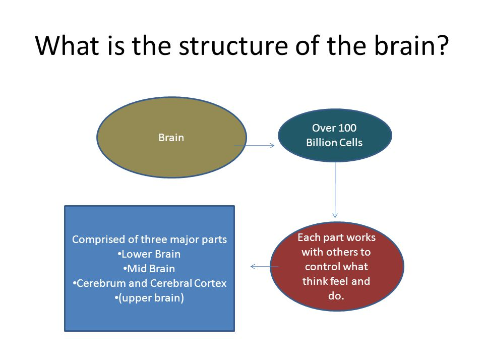 What is the structure of the brain? Brain Over 100 Billion Cells Each part works with others to control what think feel and do. Comprised of three maj