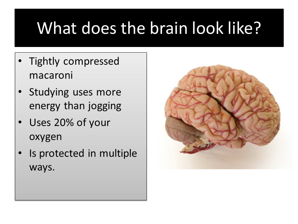 What does the brain look like?