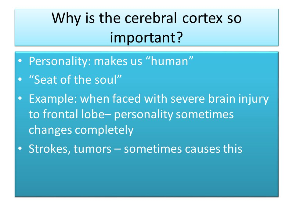 Why is the cerebral cortex so important.
