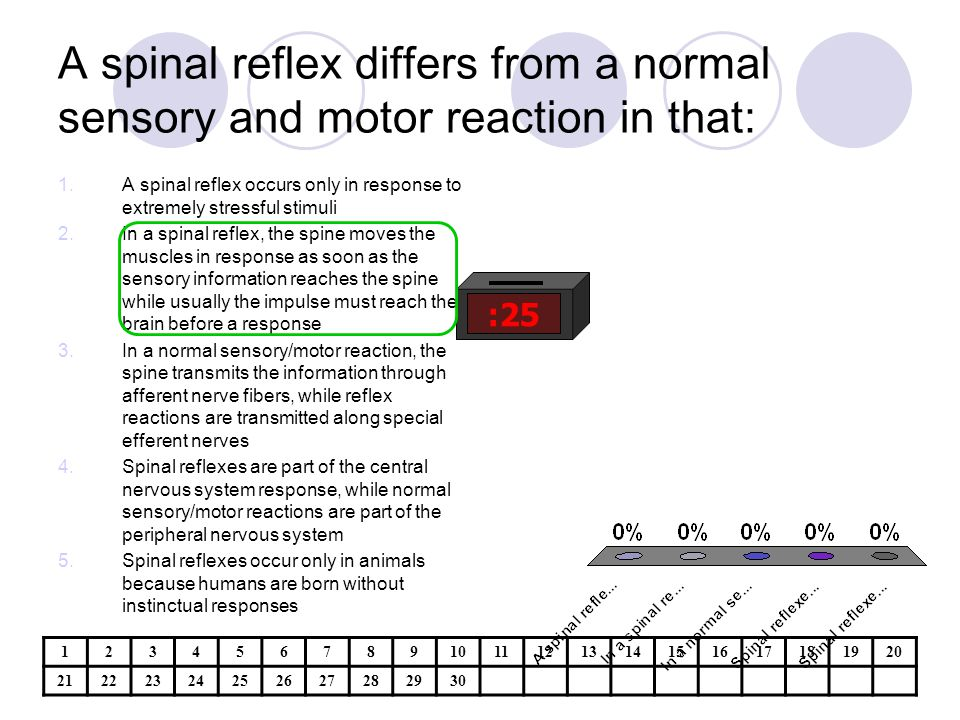 A spinal reflex differs from a normal sensory and motor reaction in that: :25 1.A spinal reflex occurs only in response to extremely stressful stimuli 2.In a spinal reflex, the spine moves the muscles in response as soon as the sensory information reaches the spine while usually the impulse must reach the brain before a response 3.In a normal sensory/motor reaction, the spine transmits the information through afferent nerve fibers, while reflex reactions are transmitted along special efferent nerves 4.Spinal reflexes are part of the central nervous system response, while normal sensory/motor reactions are part of the peripheral nervous system 5.Spinal reflexes occur only in animals because humans are born without instinctual responses 1234567891011121314151617181920 21222324252627282930