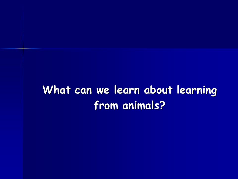 What can we learn about learning from animals?