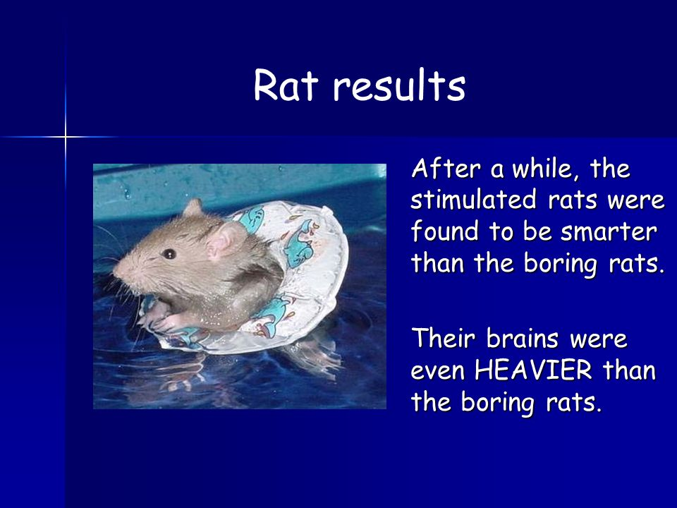 After a while, the stimulated rats were found to be smarter than the boring rats.