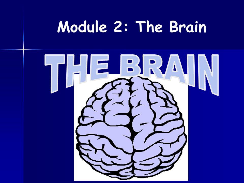Module 2: The Brain