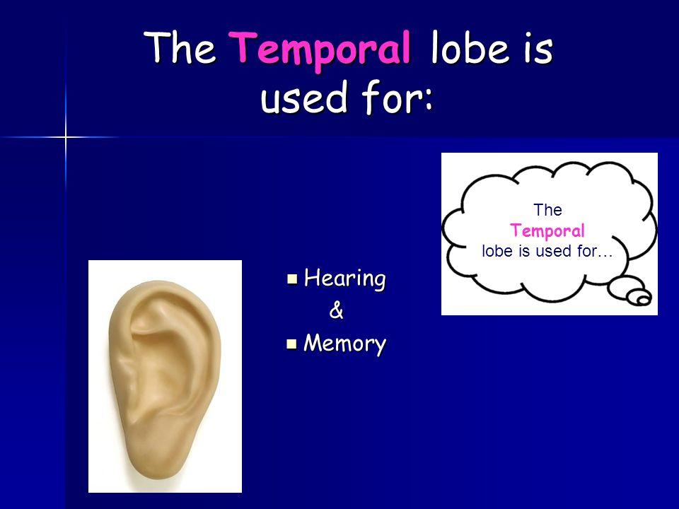 Hearing Hearing& Memory Memory The Temporal lobe is used for… The Temporal lobe is used for: