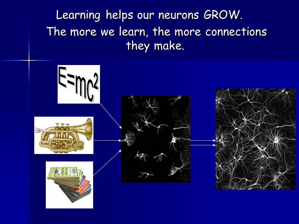 Learning helps our neurons GROW.The more we learn, the more connections they make.