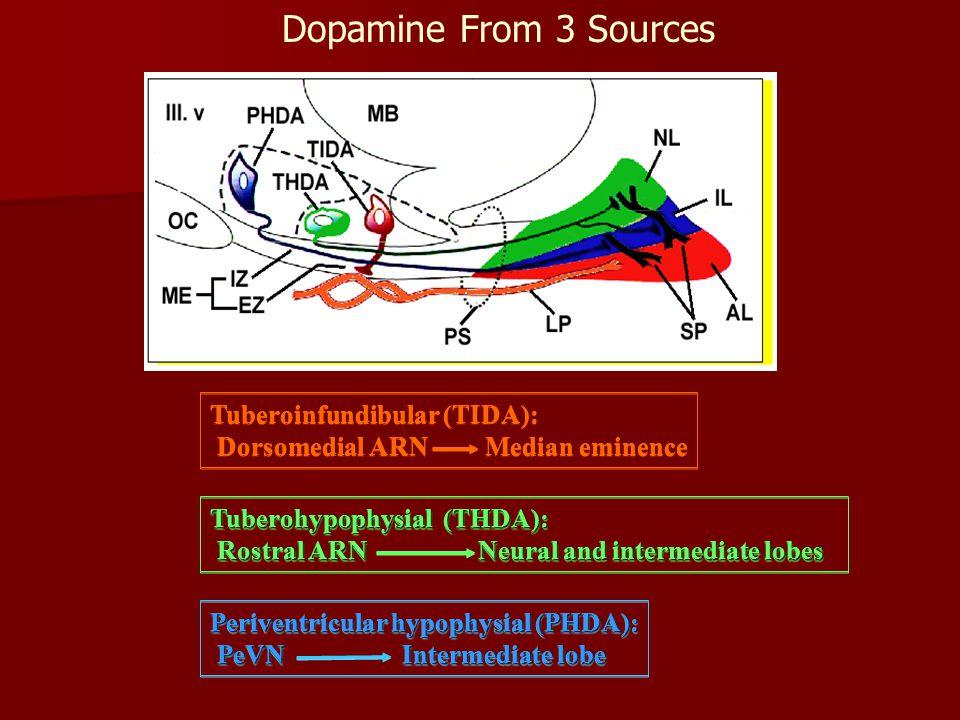 Dopamine From 3 Sources Tuberoinfundibular (TIDA): Dorsomedial ARN Median eminence Tuberoinfundibular (TIDA): Dorsomedial ARN Median eminence Tuberohypophysial (THDA): Rostral ARN Neural and intermediate lobes Rostral ARN Neural and intermediate lobes Tuberohypophysial (THDA): Rostral ARN Neural and intermediate lobes Rostral ARN Neural and intermediate lobes Periventricular hypophysial (PHDA): PeVNIntermediate lobe PeVNIntermediate lobe Periventricular hypophysial (PHDA): PeVNIntermediate lobe PeVNIntermediate lobe