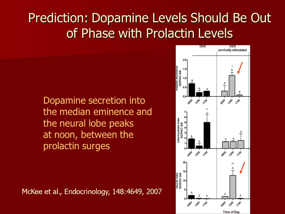 Prediction: Dopamine Levels Should Be Out of Phase with Prolactin Levels Dopamine secretion into the median eminence and the neural lobe peaks at noon, between the prolactin surges McKee et al., Endocrinology, 148:4649, 2007