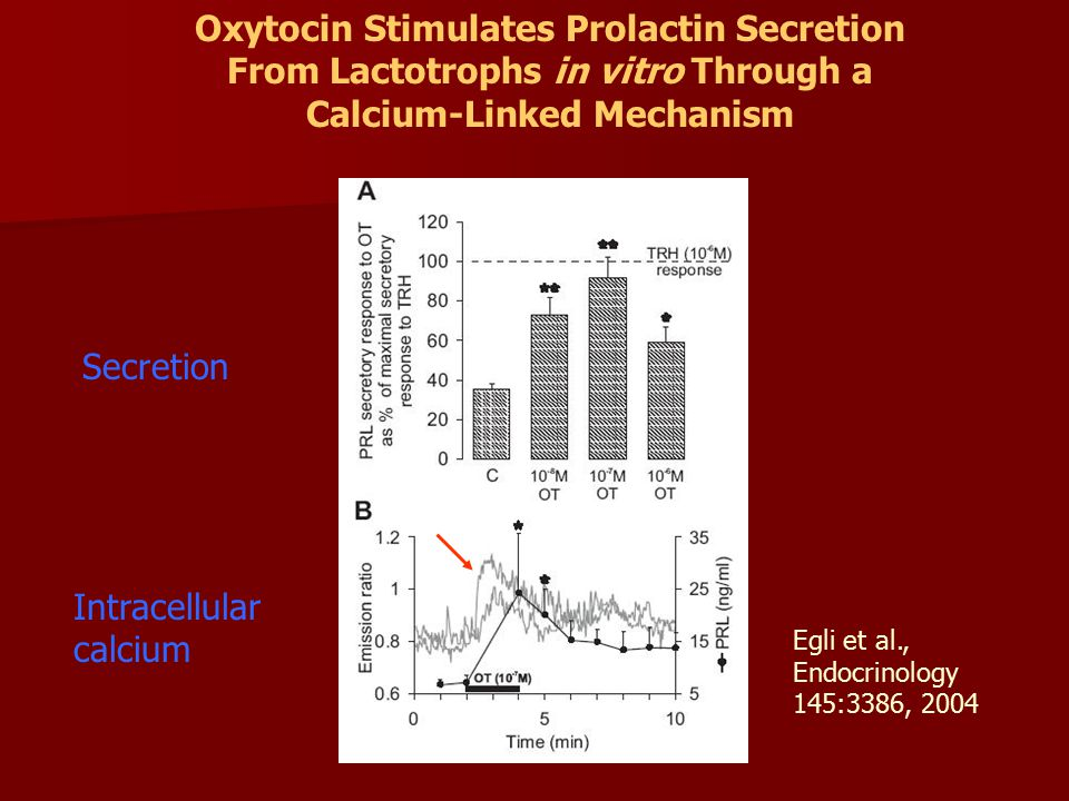 Oxytocin Stimulates Prolactin Secretion From Lactotrophs in vitro Through a Calcium-Linked Mechanism Egli et al., Endocrinology 145:3386, 2004 Secretion Intracellular calcium