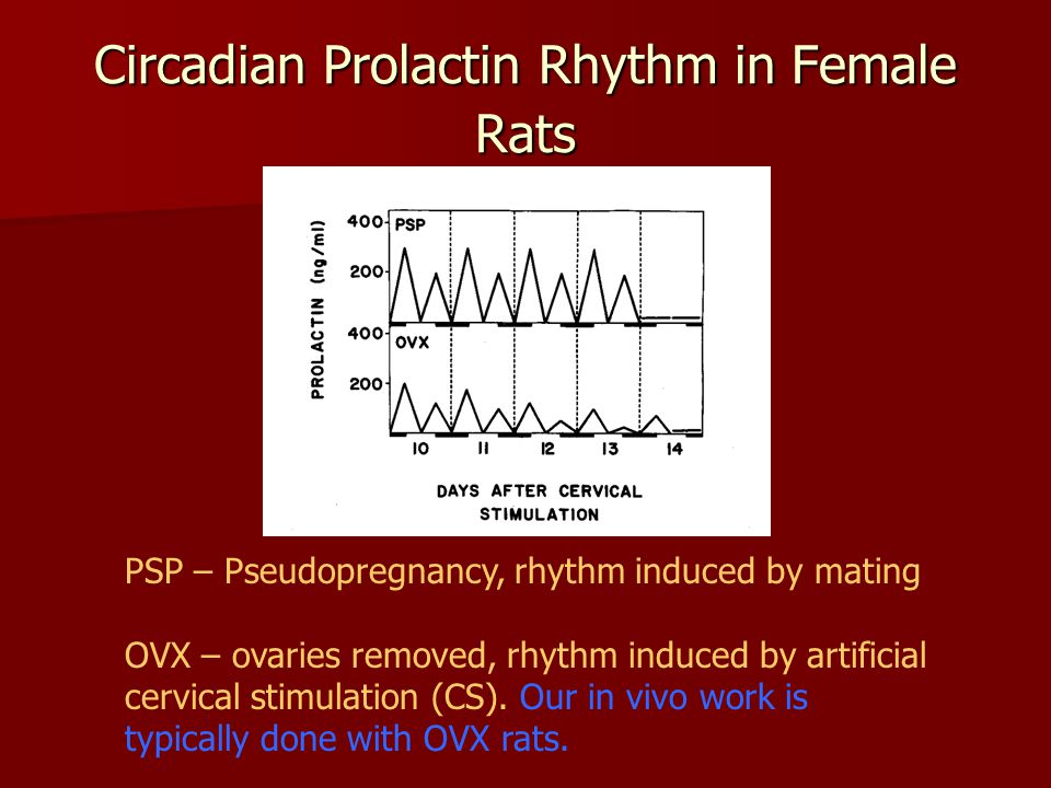 Circadian Prolactin Rhythm in Female Rats PSP – Pseudopregnancy, rhythm induced by mating OVX – ovaries removed, rhythm induced by artificial cervical