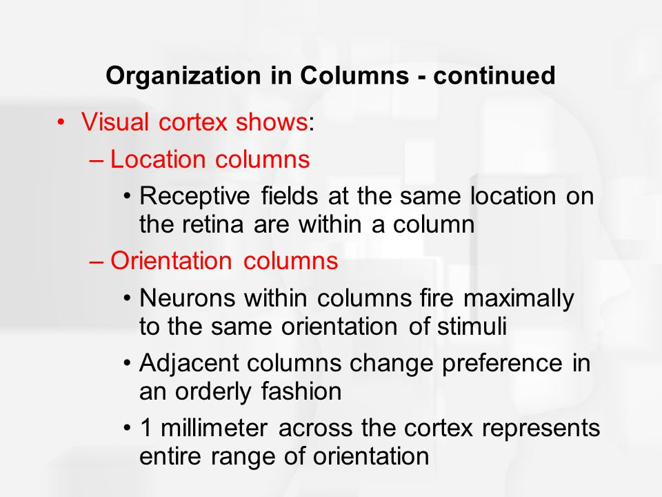 Organization in Columns - continued Visual cortex shows: –Location columns Receptive fields at the same location on the retina are within a column –Orientation columns Neurons within columns fire maximally to the same orientation of stimuli Adjacent columns change preference in an orderly fashion 1 millimeter across the cortex represents entire range of orientation