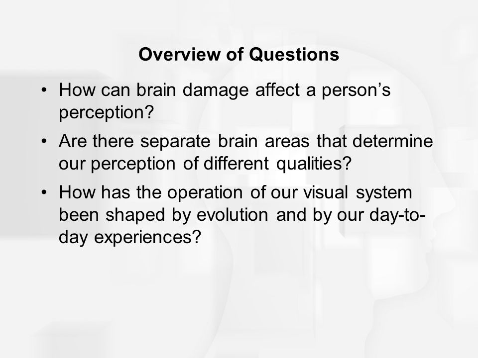 Overview of Questions How can brain damage affect a person's perception.