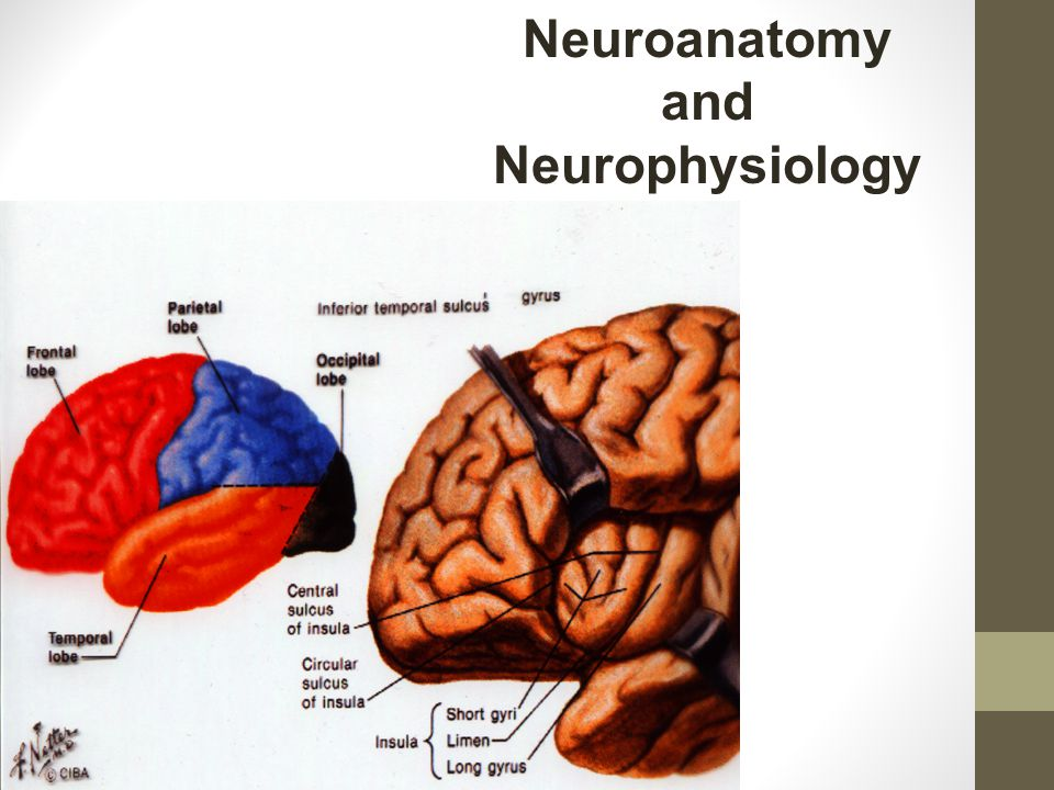 Lesion Studies TBI/Right Hemisphere Damage Decision making Problem solving Judgment Response inhibition Pragmatics Emotional lability Personality characteristics Communication of emotion, intent, humor Abstract information Frontal- response inhibition