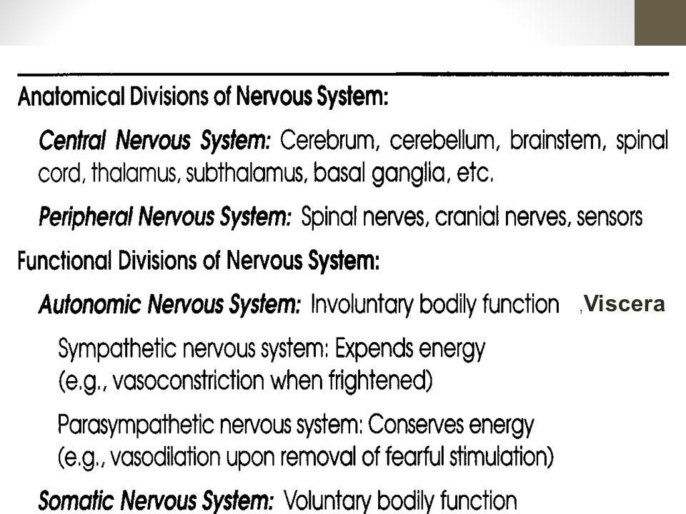 Dendrite Cell Body Axon