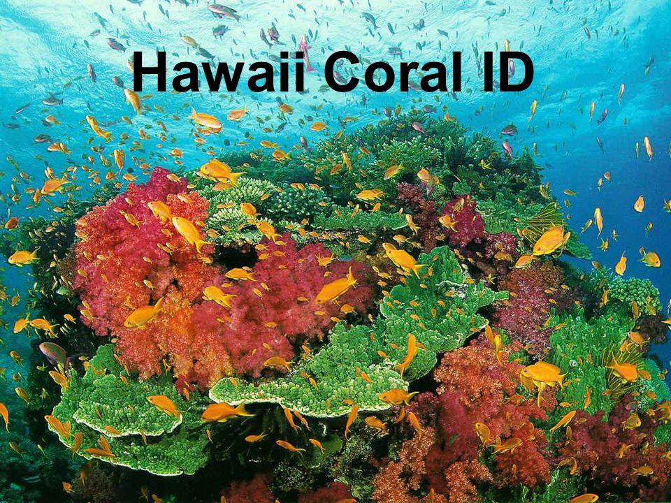 Hawaii Coral ID
