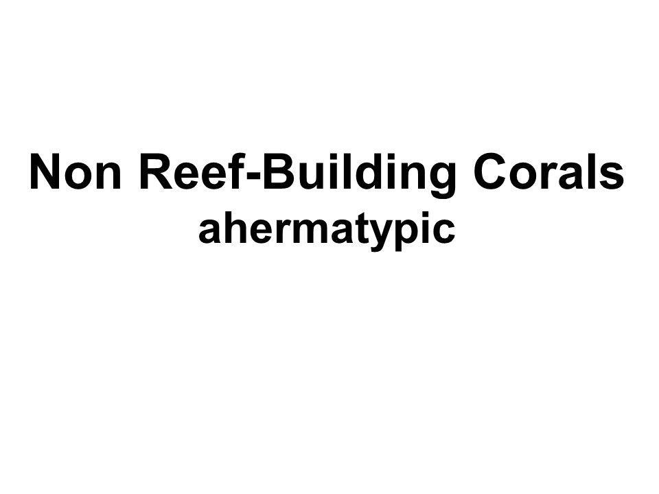 Non Reef-Building Corals ahermatypic