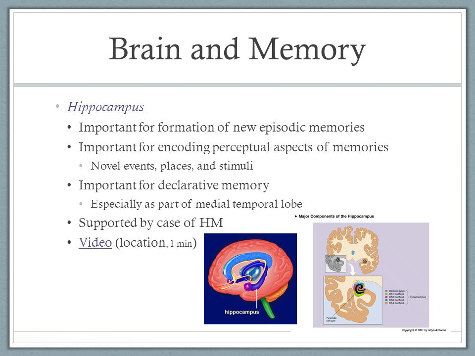 Hippocampus Important for formation of new episodic memories Important for encoding perceptual aspects of memories Novel events, places, and stimuli Important for declarative memory Especially as part of medial temporal lobe Supported by case of HM Video (location, 1 min ) Video Brain and Memory