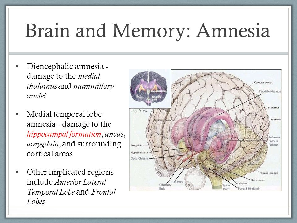 Brain and Memory: Amnesia Diencephalic amnesia - damage to the medial thalamus and mammillary nuclei Medial temporal lobe amnesia - damage to the hippocampal formation, uncus, amygdala, and surrounding cortical areas Other implicated regions include Anterior Lateral Temporal Lobe and Frontal Lobes