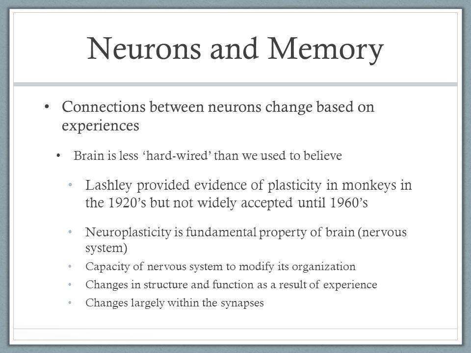 Amnesia Case Study: HM HM shows normal procedural and implicit memory despite extensive declarative and explicit memory deficits.