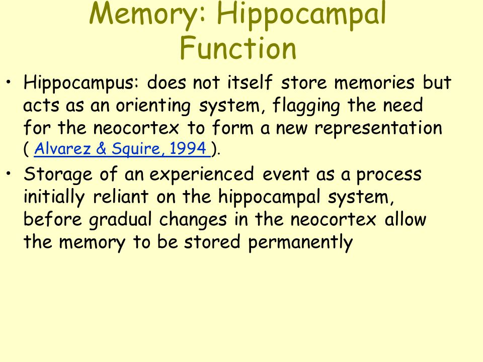 Memory: Hippocampal Function Hippocampus: does not itself store memories but acts as an orienting system, flagging the need for the neocortex to form