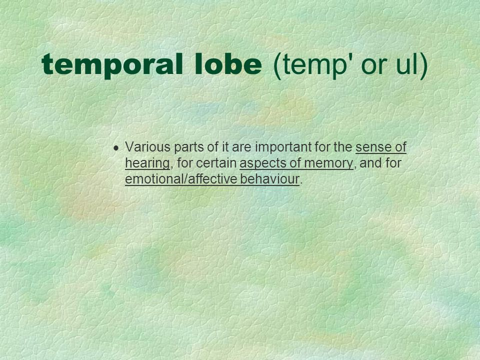 temporal lobe (temp or ul)  Various parts of it are important for the sense of hearing, for certain aspects of memory, and for emotional/affective behaviour.