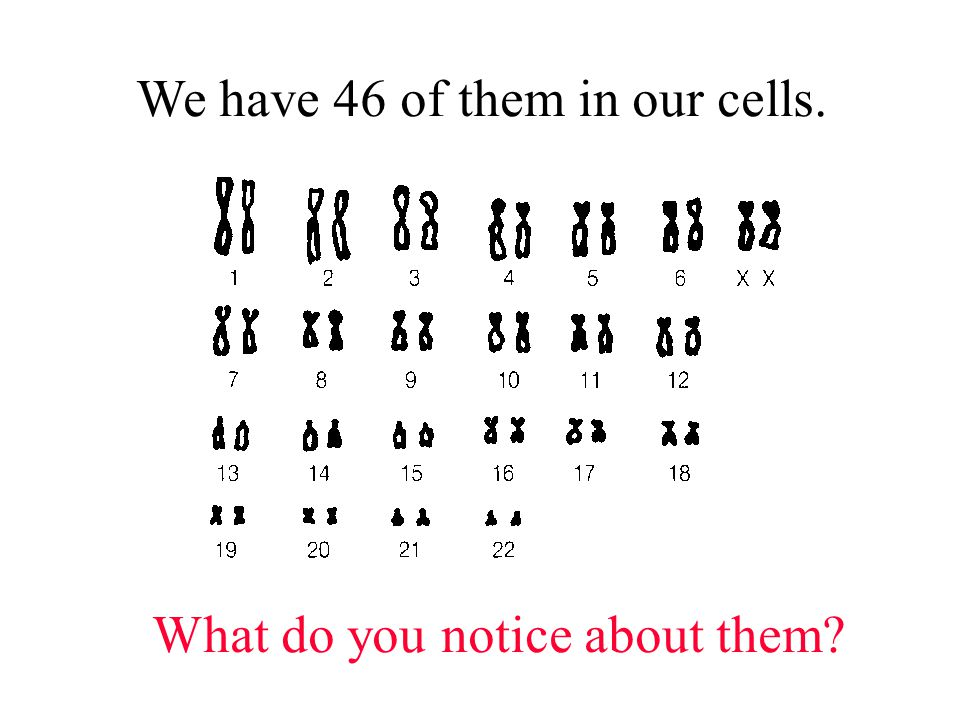 All our chromosomes are in pairs Where did we get each one from.