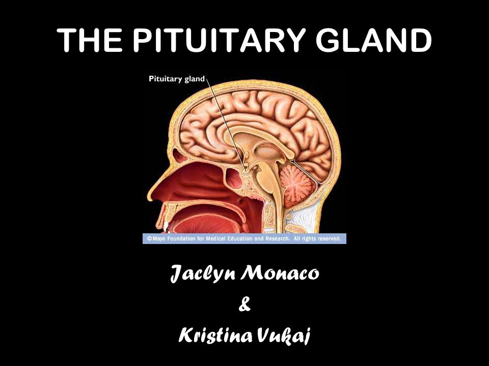 THE PITUITARY GLAND Jaclyn Monaco & Kristina Vukaj