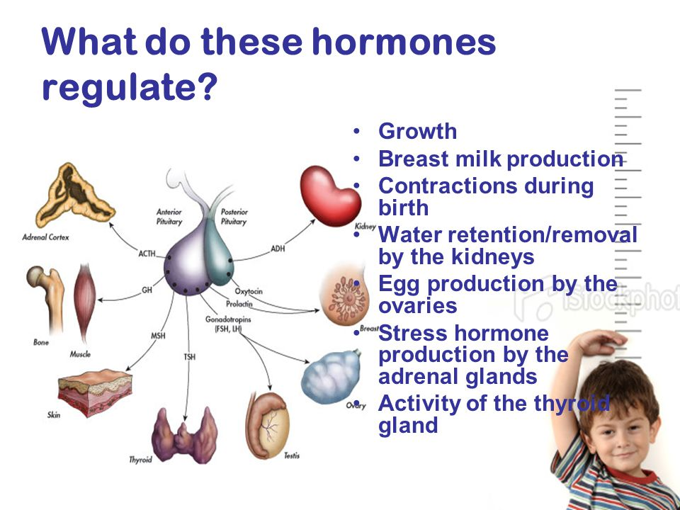 What do these hormones regulate.