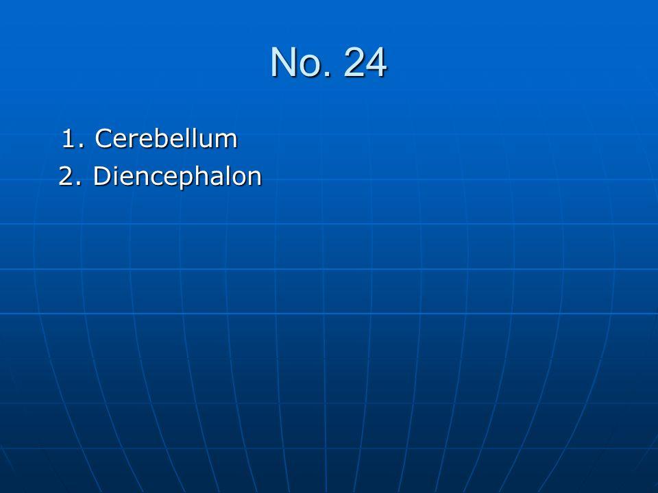 No. 24 1. Cerebellum 1. Cerebellum 2. Diencephalon 2. Diencephalon
