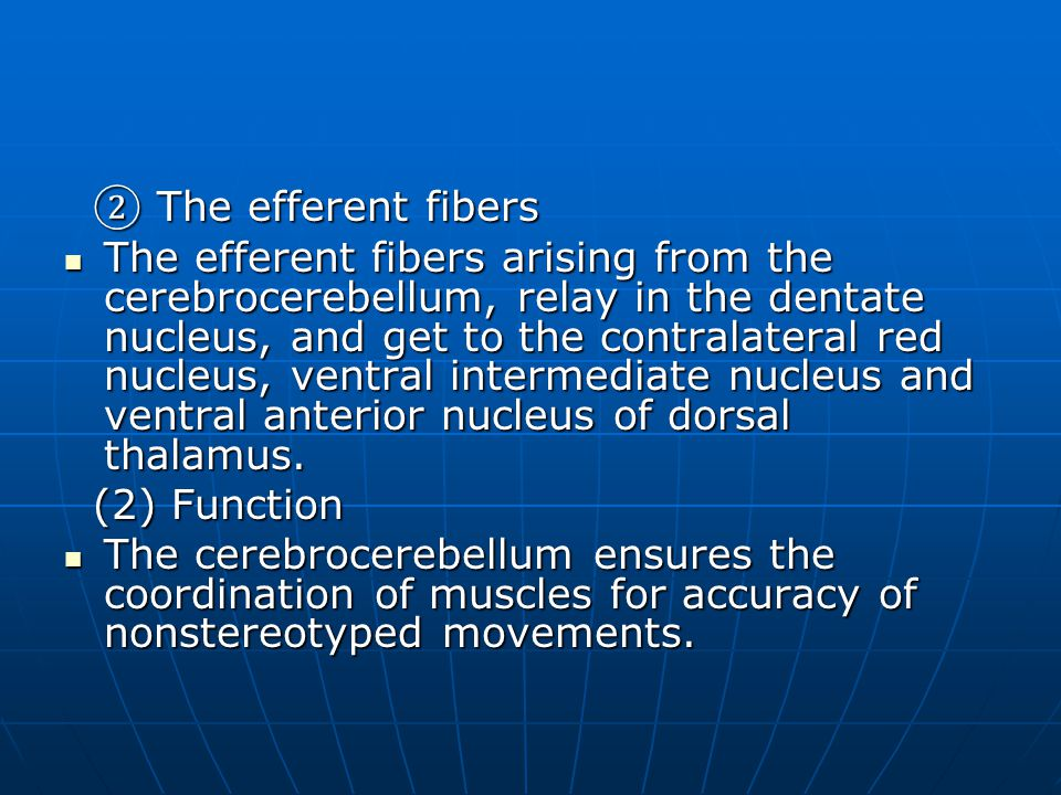 ② The efferent fibers ② The efferent fibers The efferent fibers arising from the cerebrocerebellum, relay in the dentate nucleus, and get to the contralateral red nucleus, ventral intermediate nucleus and ventral anterior nucleus of dorsal thalamus.