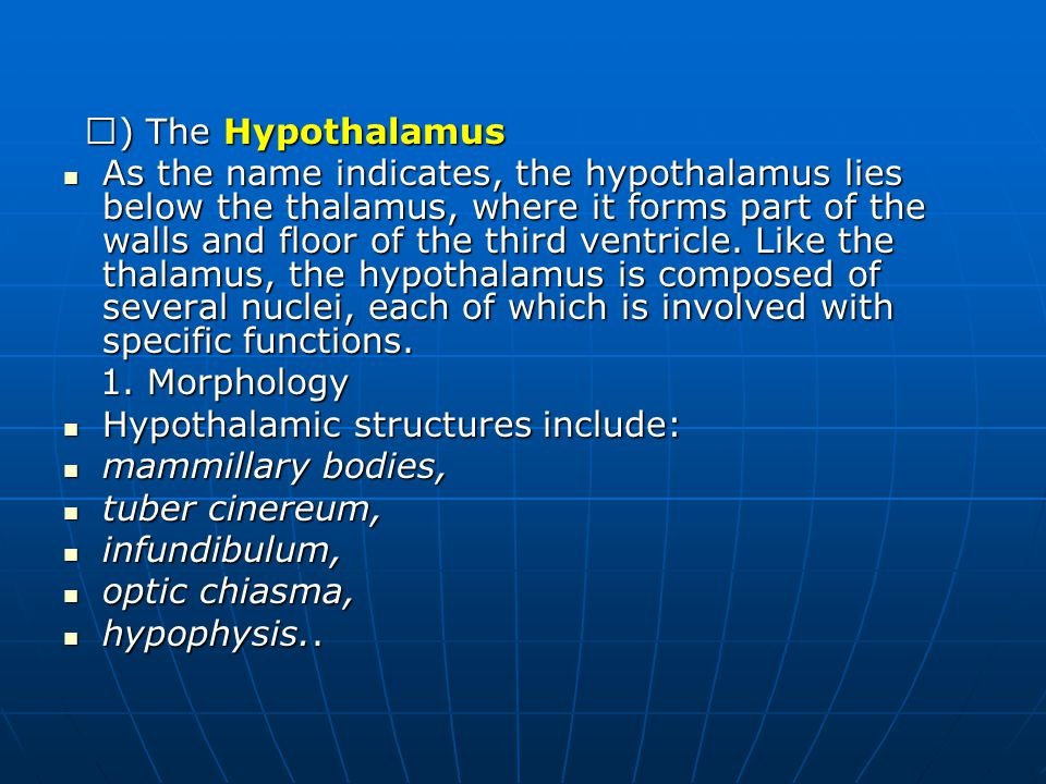 Ⅴ ) The Hypothalamus Ⅴ ) The Hypothalamus As the name indicates, the hypothalamus lies below the thalamus, where it forms part of the walls and floor