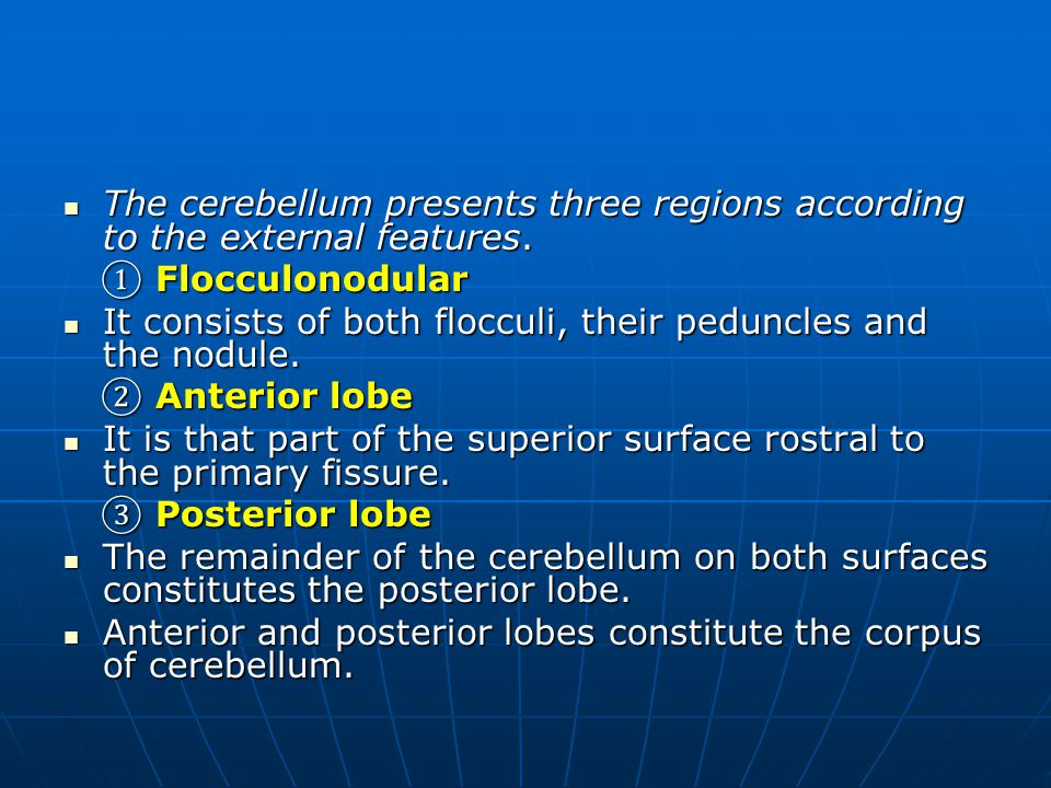 The cerebellum presents three regions according to the external features.