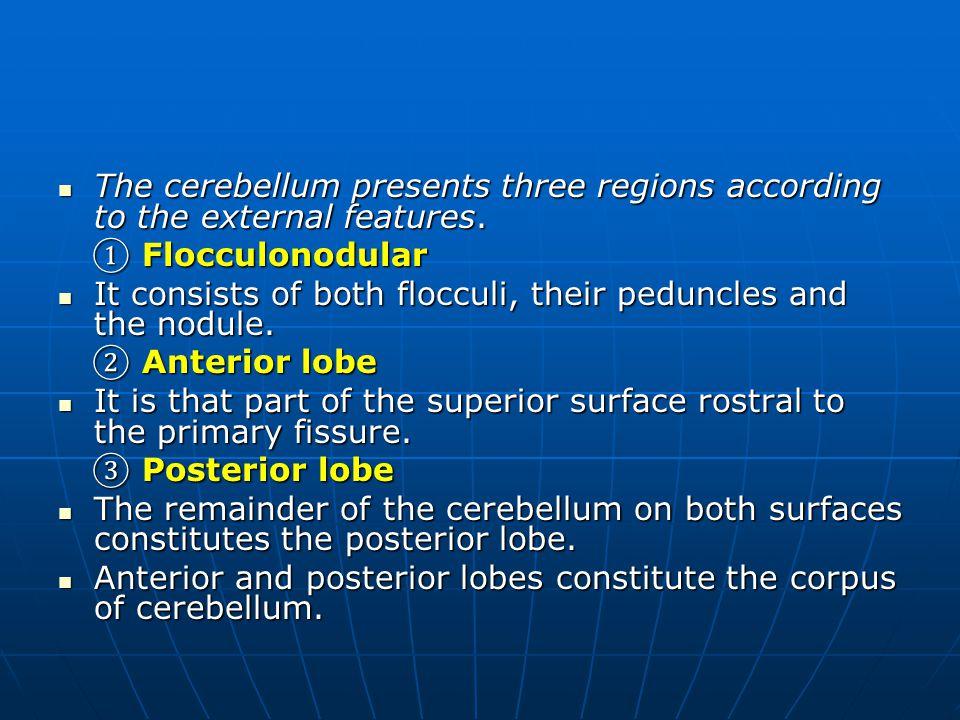 The cerebellum presents three regions according to the external features. The cerebellum presents three regions according to the external features. ①