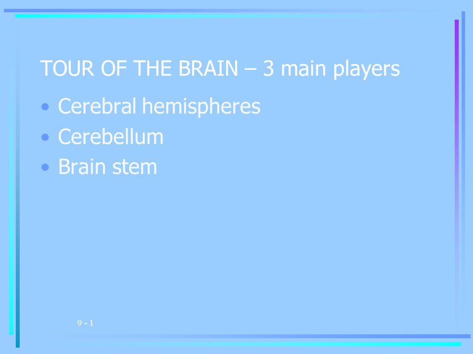 9 - 1 TOUR OF THE BRAIN – 3 main players Cerebral hemispheres Cerebellum Brain stem