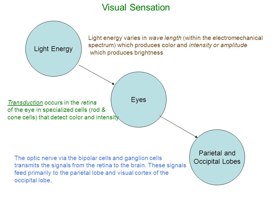 Perception Bottom-up Processes: –These processes are driven by the sensory experiences created from the stimulus from the environment; –Distinctive features of the stimulus control our representation of that stimulus (e.g.
