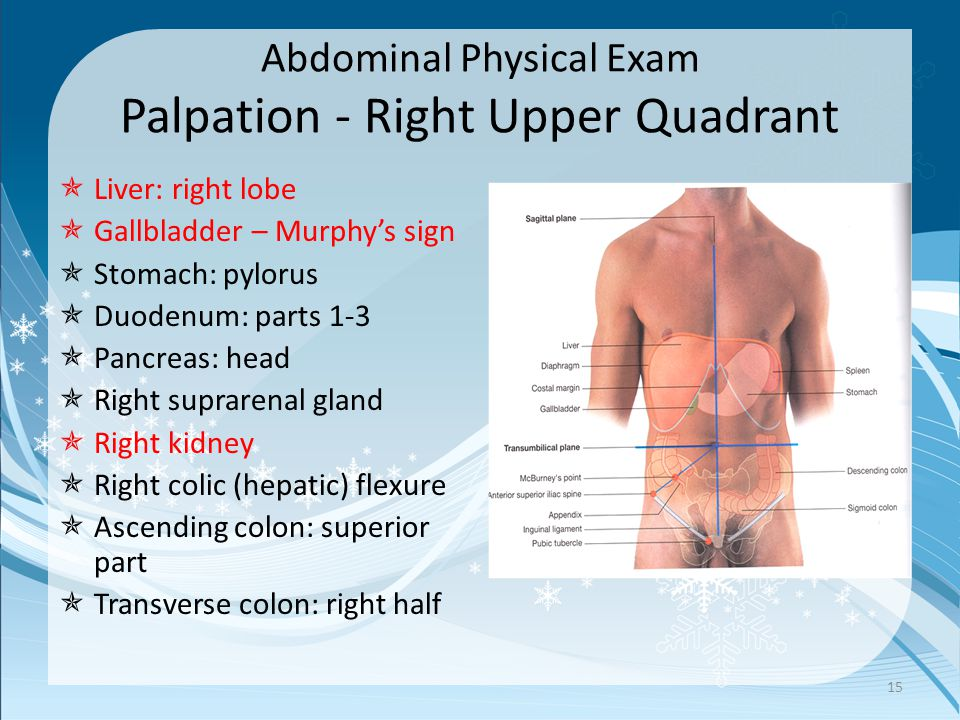 Abdominal Physical Exam Palpation - Right Upper Quadrant  Liver: right lobe  Gallbladder – Murphy's sign  Stomach: pylorus  Duodenum: parts 1-3 