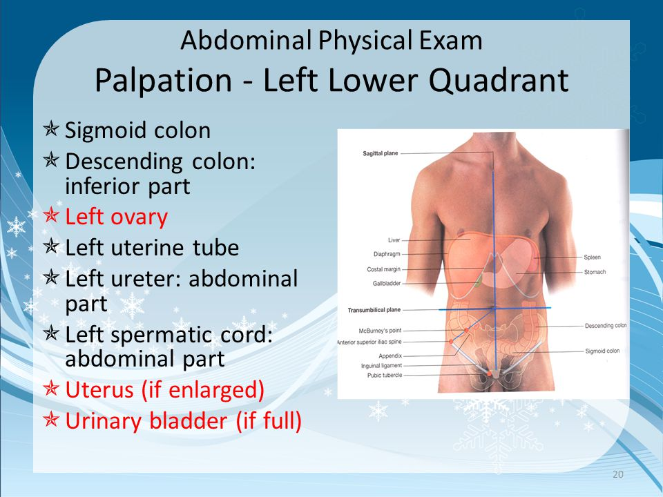 Abdominal Physical Exam Palpation - Left Lower Quadrant 20  Sigmoid colon  Descending colon: inferior part  Left ovary  Left uterine tube  Left ureter: abdominal part  Left spermatic cord: abdominal part  Uterus (if enlarged)  Urinary bladder (if full)