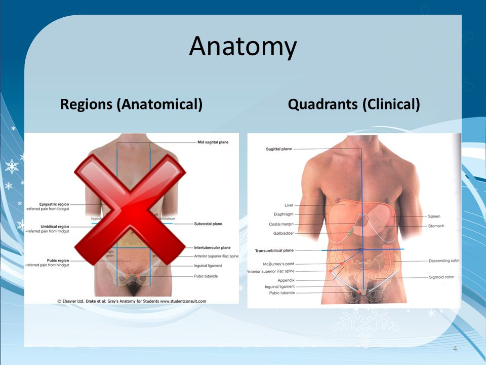 Anatomy Regions (Anatomical)Quadrants (Clinical) 4