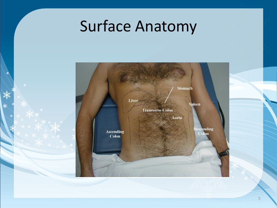 Surface Anatomy 5