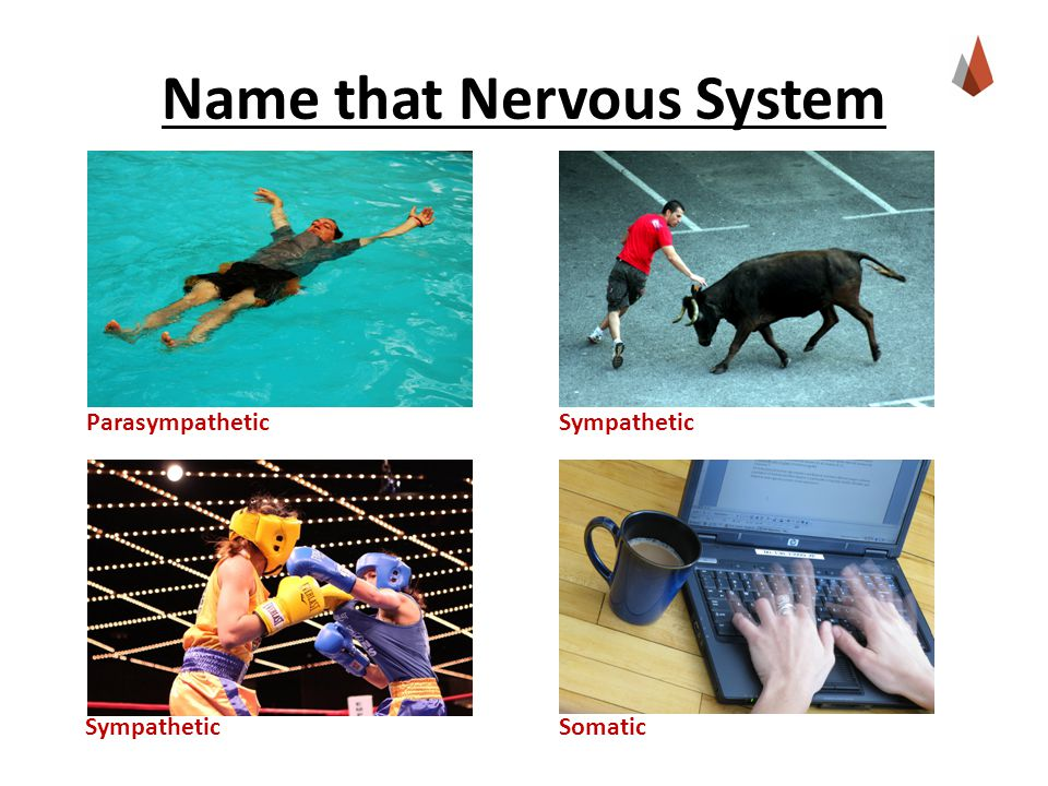 Name that Nervous System Parasympathetic Sympathetic Somatic