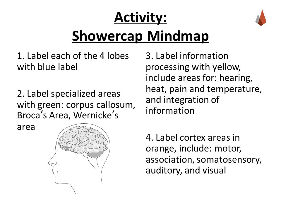 Activity: Showercap Mindmap 1. Label each of the 4 lobes with blue label 2.