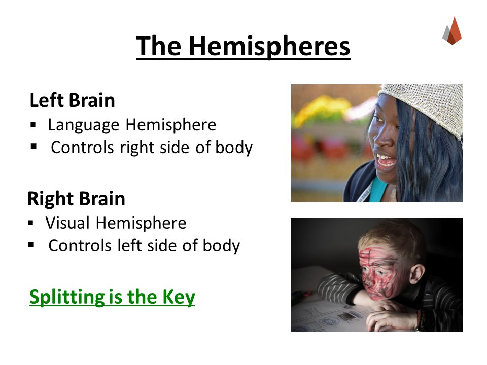 The Hemispheres Right Brain  Visual Hemisphere  Controls left side of body Splitting is the Key Left Brain  Language Hemisphere  Controls right side of body