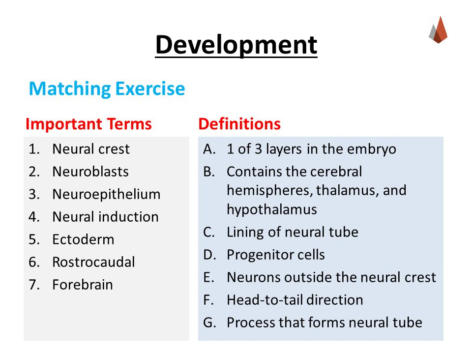 Important Terms 1.Neural crest 2.Neuroblasts 3.Neuroepithelium 4.Neural induction 5.Ectoderm 6.Rostrocaudal 7.Forebrain Definitions A.1 of 3 layers in the embryo B.Contains the cerebral hemispheres, thalamus, and hypothalamus C.Lining of neural tube D.Progenitor cells E.Neurons outside the neural crest F.Head-to-tail direction G.Process that forms neural tube Matching Exercise
