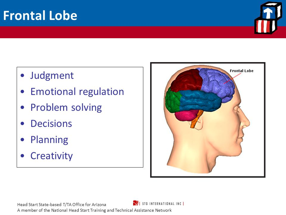 Head Start State-based T/TA Office for Arizona A member of the National Head Start Training and Technical Assistance Network Frontal Lobe Judgment Emo