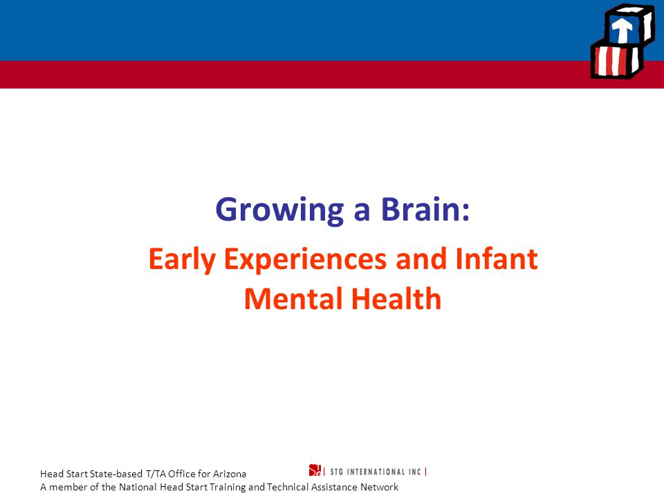 Head Start State-based T/TA Office for Arizona A member of the National Head Start Training and Technical Assistance Network Growing a Brain… Growing a Brain: Early Experiences and Infant Mental Health