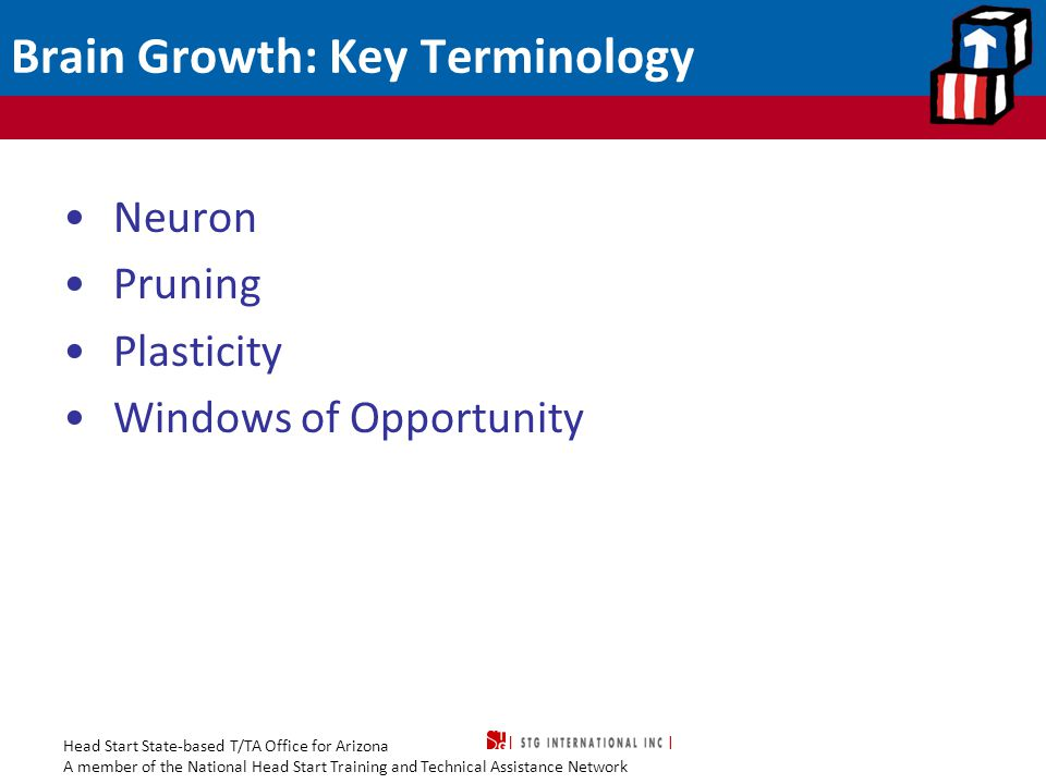 Head Start State-based T/TA Office for Arizona A member of the National Head Start Training and Technical Assistance Network Brain Growth: Key Terminology Neuron Pruning Plasticity Windows of Opportunity