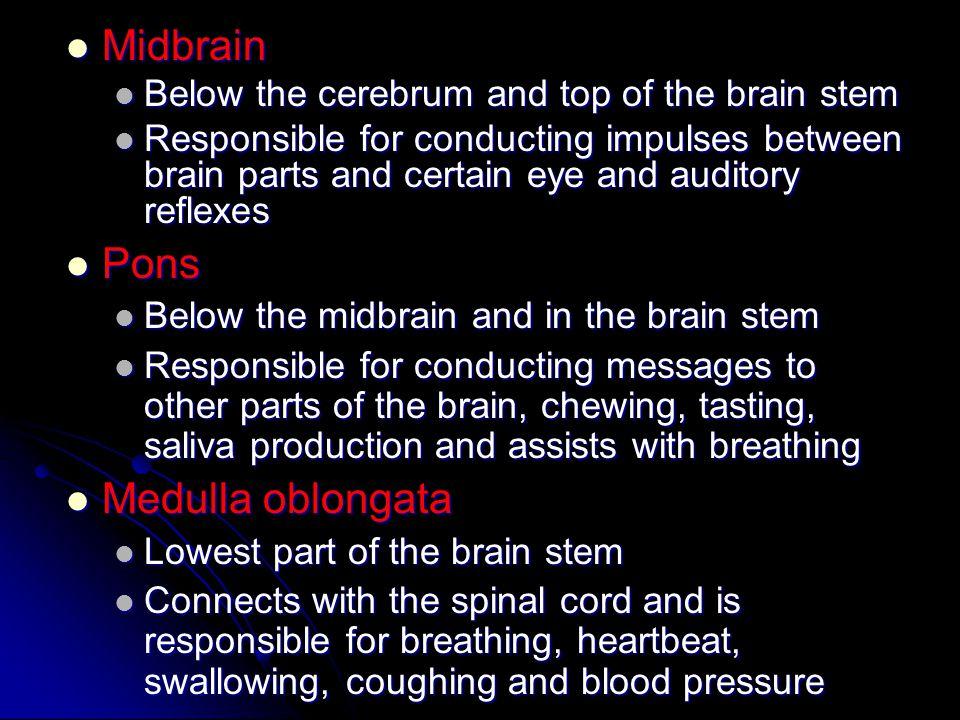 Midbrain Midbrain Below the cerebrum and top of the brain stem Below the cerebrum and top of the brain stem Responsible for conducting impulses betwee