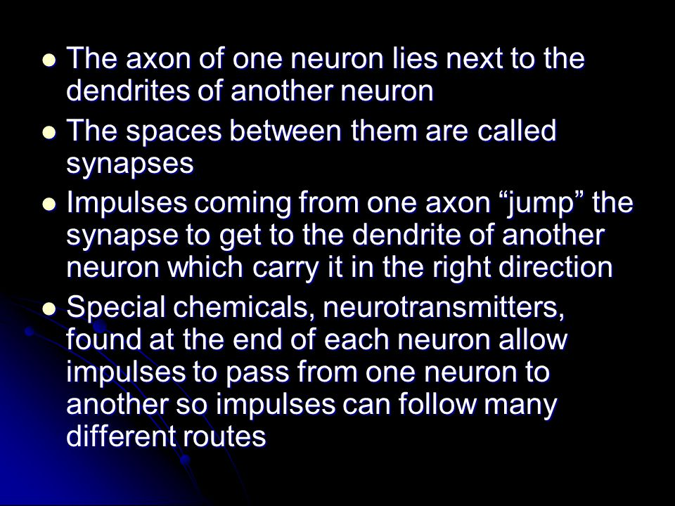 The axon of one neuron lies next to the dendrites of another neuron The axon of one neuron lies next to the dendrites of another neuron The spaces bet
