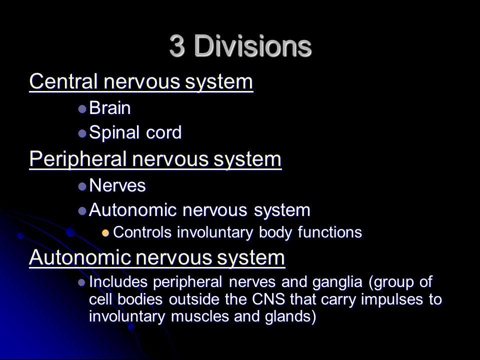 3 Divisions Central nervous system Central nervous system Brain Brain Spinal cord Spinal cord Peripheral nervous system Peripheral nervous system Nerv